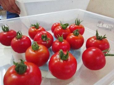 ミニトマトできた110706.jpg