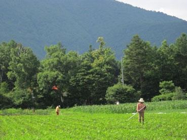 山とイイ雰囲気110710.jpg
