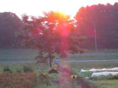 朝日に向かって、陵110710.jpg