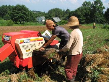小麦、航、みず110717.jpg