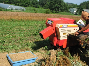 小麦脱穀110717.jpg