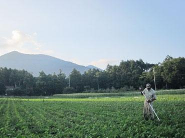 飯綱山と綿110715.jpg