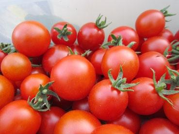 ミニトマトどアップ110715.jpg