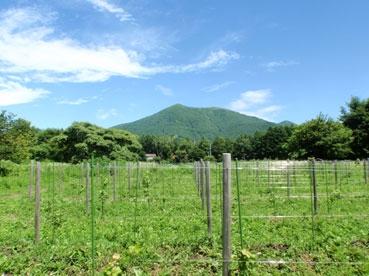 山110802.jpg