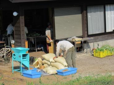 小麦袋と綿110803.jpg
