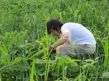 草刈り、陵110808.jpg