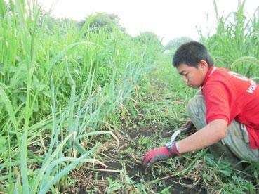 草刈り、侑110810.jpg