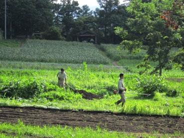 農作業風景綿.祢110818.jpg