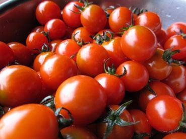 ミニトマトが昼にでた110906.jpg