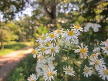 何かの花110915.jpg