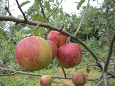 りんごどアップ110918.jpg
