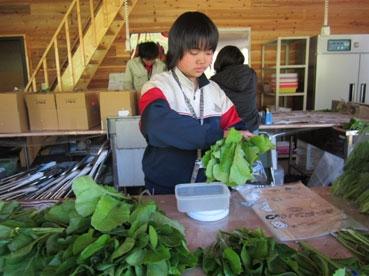 日子野沢菜袋に入れる110929.jpg