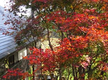 中庭の紅葉111014.jpg