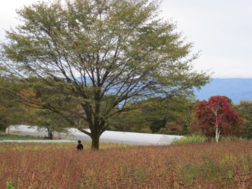 そば畑と木と人111023.jpg