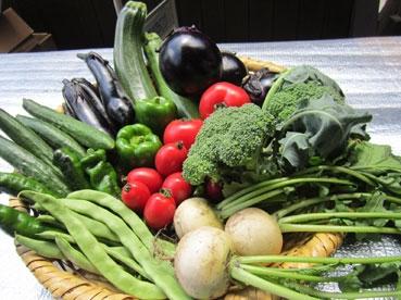 お野菜111025.jpg