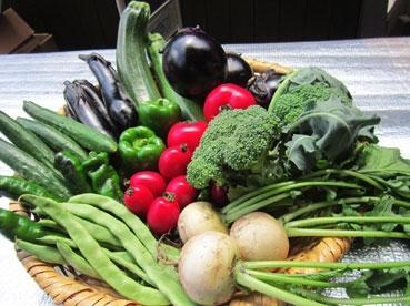 かごに野菜110818.jpg