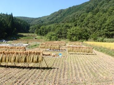 米干している120118.jpg