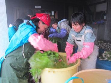 野沢菜洗い120119.jpg