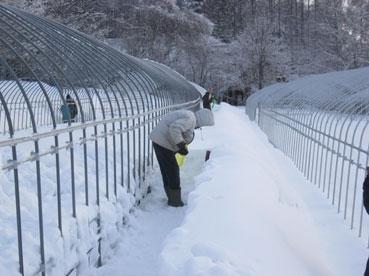 雪かき.江見120228.jpg