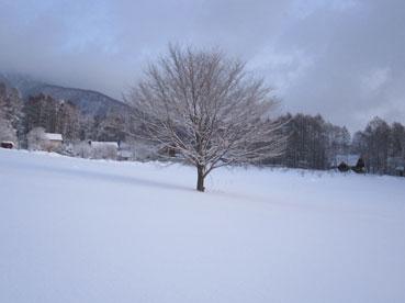ファームのおおきな木120228.jpg