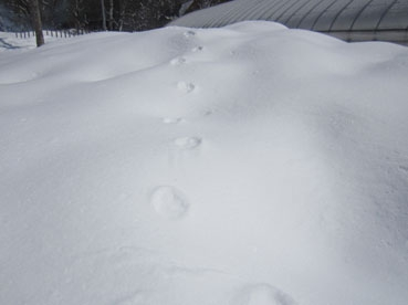 footprint1.120311.jpg