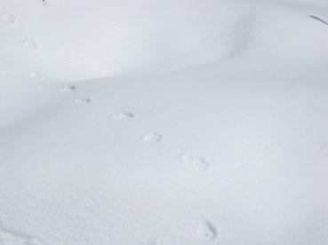 footprint2.120311.jpg