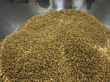 小麦.jpg